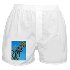 Sloe berries (Prunus spinosa) - Boxer Shorts