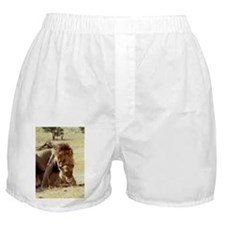 Lions mating - Boxer Shorts