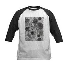 itochondria in cell - Tee