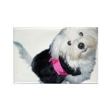 Cute Coton de tulear Rectangle Magnet (10 pack)