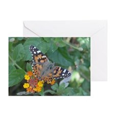 Butterfly: Painted Lady Greeting Cards