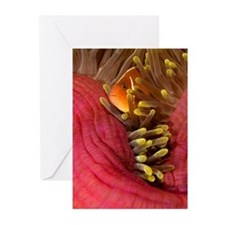 anemone fish Greeting Cards (Pk of 10)