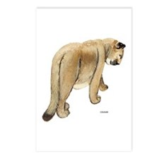 Cougar Cat Animal Postcards (Package of 8)
