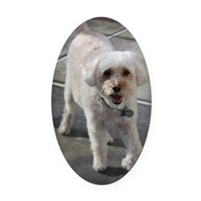 Smiling Cockapoo Dog Oval Car Magnet