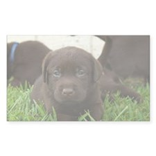 Chocolate Lab puppy laying in  Decal