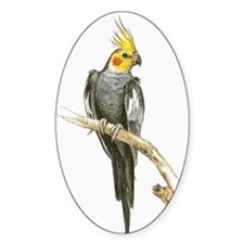 Illustration of Cockatiel (Nymphicu Decal