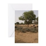 Goats in argan tree Greeting Card