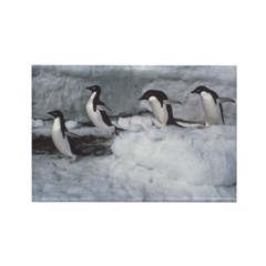 Penguin follow my leader Rectangle Magnet (10 pack