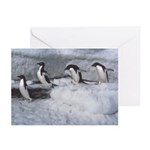 Penguin follow my leader Greeting Cards (Package o