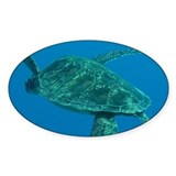 Lonely Turtle Decal