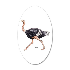Ostrich Bird Animal 20x12 Oval Wall Decal
