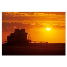 A Combine (Harvester) Harvests Winter Wheat At Sun
