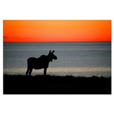 Moose Silhouetted At Sunset, Gros Morne National P
