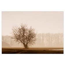 Tree Silhouette In Fog