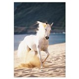 White Horse Running On The Beach