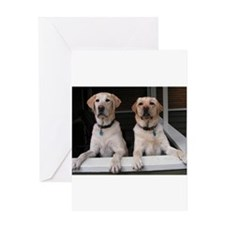 Cute Yellow lab photography Greeting Card