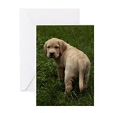 Unique Yellow labrador Greeting Card