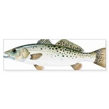 Spotted Sea Trout (Cynoscion nebu Bumper Sticker