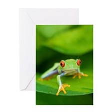 Red eyed frog (Agalychnis callidryas Greeting Card
