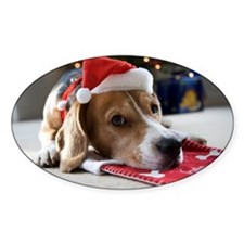 Beagle lying on a Christmas stockin Decal