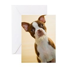 Boston Terrier puppy, close-up Greeting Card