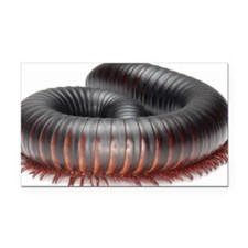 Giant African millipede (arch Rectangle Car Magnet