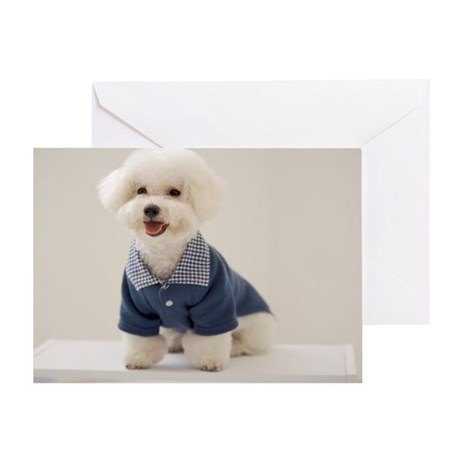 Portrait of Bichon Frise standing on Greeting Card