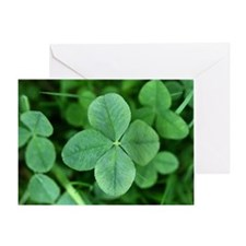 Four-leaf clover, close-up Greeting Card