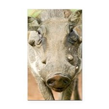 """Closeup of face of warthog i Rectangle Car Magnet"