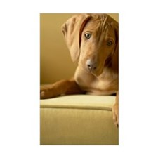 Hungarian Vizsla puppy sitting Decal