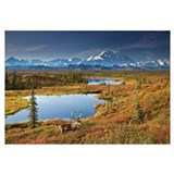 Bull Caribou And Tundra Pond With Mt. McKinley, De