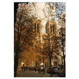 Trees in front of a cathedral, Notre Dame, Paris,