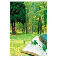 Books and Ivy Plant on Grass