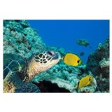 Green Sea Turtle (Chelonia Mydas) And A Butterfly
