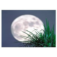 Grass blades With Full Moon in Background