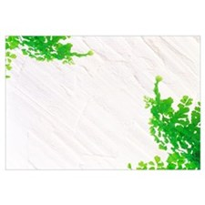 Green Leaves on White Textured Background