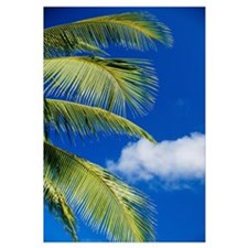 Coconut Palm Trees And Blue Sky
