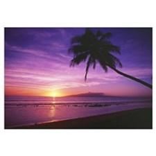 Hawaii, Maui, Olowalu, Palm Tree Silhouette At Sun