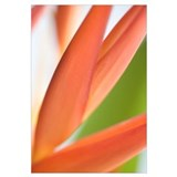Close-Up View Of Heliconia