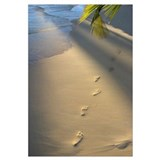 Footprints In Sand At Water's Edge, Soft Warm Gold