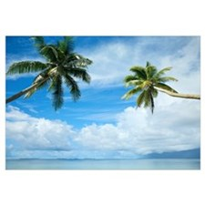 Two Palm Trees, Clear Calm Turquoise Waters, Large
