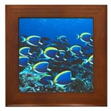 Surgeon Fish Framed Tile