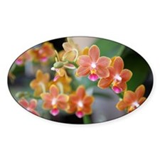 Phalaenopsis Orchid, close-up Decal