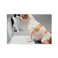Chihuahua on laptop with cat watc Rectangle Magnet