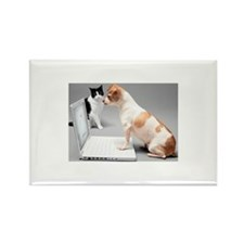Chihuahua on laptop wit Rectangle Magnet (10 pack)