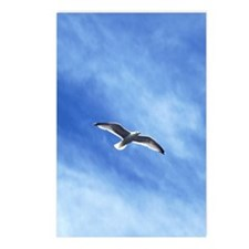 flying sea-gull Postcards (Package of 8)