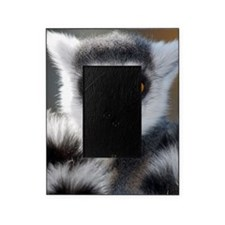 Ring tailed lemur Picture Frame