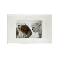 Two English Bulldogs fa Rectangle Magnet (10 pack)