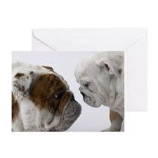 Two English Bulldogs fac Greeting Cards (Pk of 20)