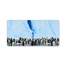 EMPEROR PENGUIN COLONY (APT Aluminum License Plate